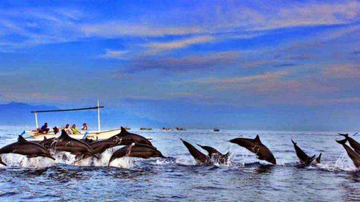 Lovina-Dolphin-Bali