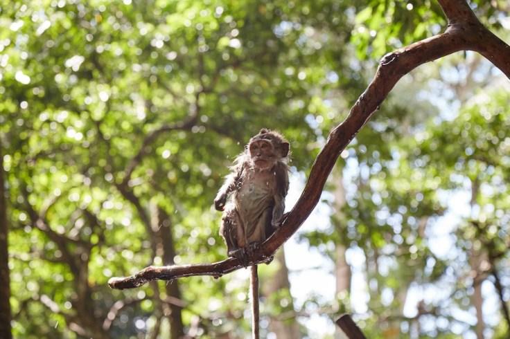 Monkey-Forest-